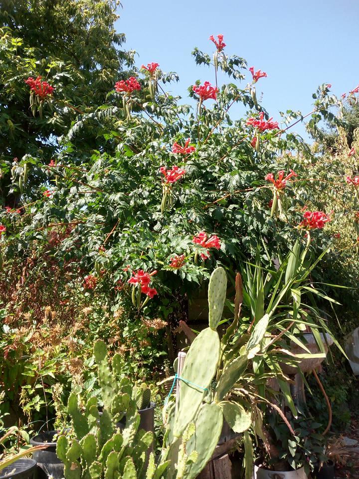 http://www.agriturismodalpoeta.com/wp-content/uploads/2017/08/piante.jpg
